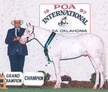 Future Gold standing 2013 at Black Fox Equestrian Center